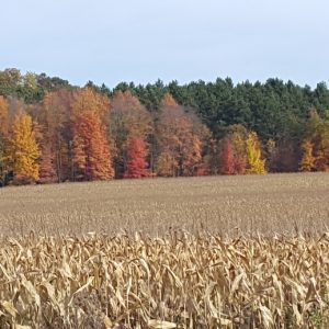 Fall Colors & Corn Field