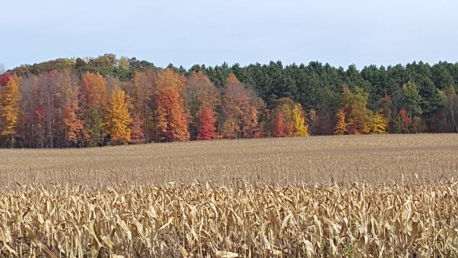 Fall Colors & Corn Field