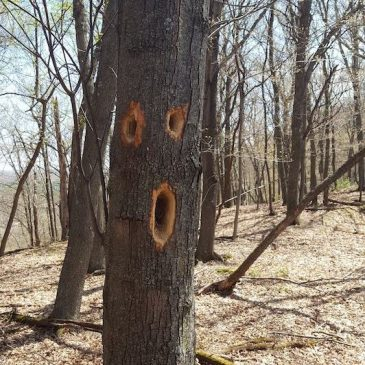 Surprised an Oak Tree