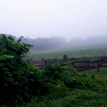 Foggy Morning in August