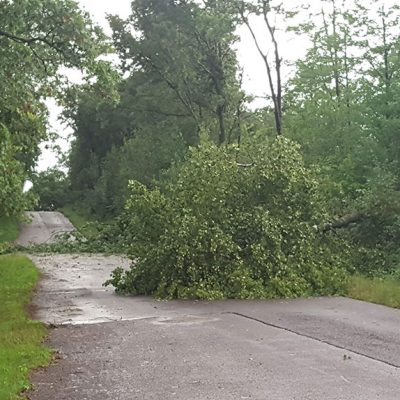 Thunderstorm tree damage in Otter Creek Wisconsin