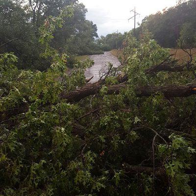 Thunderstorm tree damage in Otter Creek Wisconsin