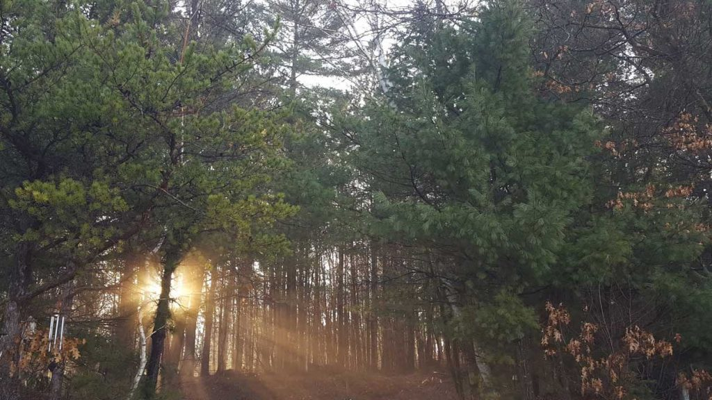 The sun is rising through the woods.