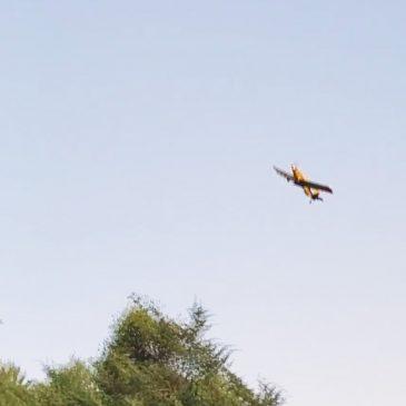 Aerial Aerobatics! Not Something You See Everyday