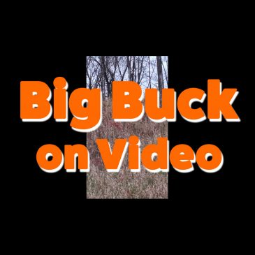 Big Buck on Video